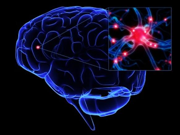 cerebro-atividade-neuronio